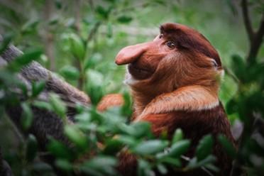 borneo-gruppresor-äventyrsresor-natur-djungel