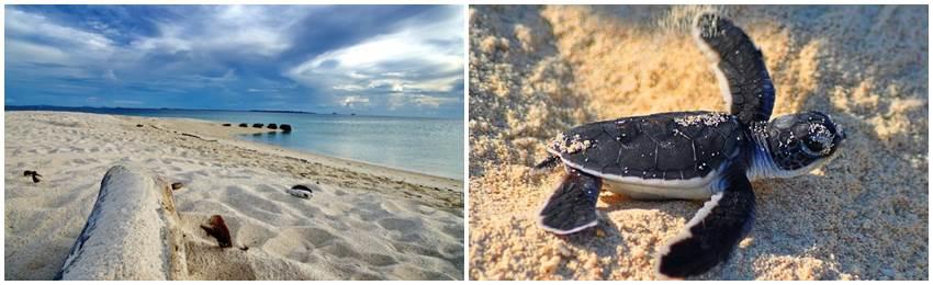borneo-turtle-island-resa