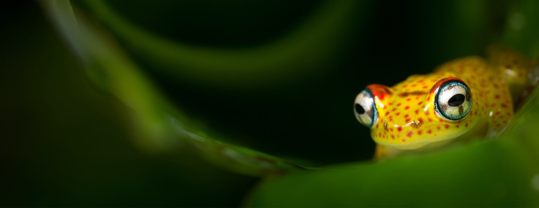 Familjeresa: Upplev Borneos Djur & Natur  [TAC++]