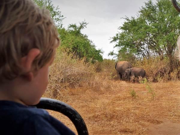 Safari i Udawalawe