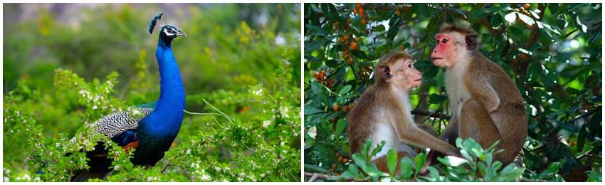 rundresa-sri-lanka-yala-nationalpark