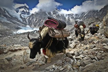aventyrsresor-singelresor-mount-everest-trekking-nepal