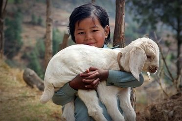 Nepal Girl Local People Sherpa Child Lamb Trek