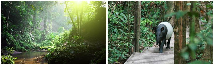 äventyrsresor-malaysia-Taman Negara