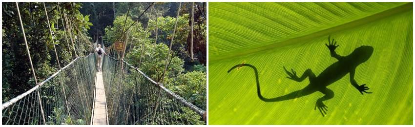 gruppresa-malaysia-tamara-negara