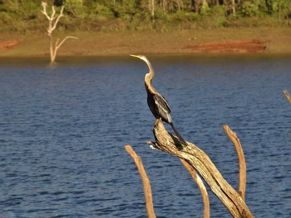 periyar-nationalpark