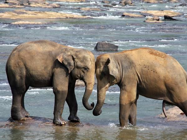 Udawalawe Nationalpark