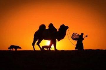 gruppresa-mongoliet-aeventyrsresa