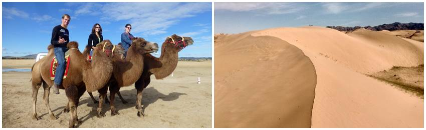 kamelridning-mongoliet