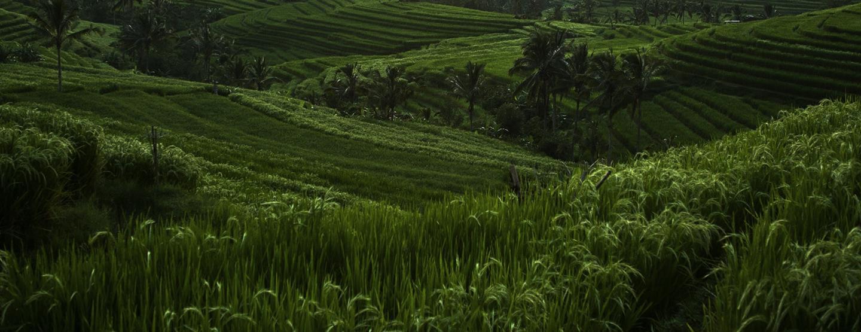 Äventyrsresa: Aktiv semester på vackra Bali [TAC+]