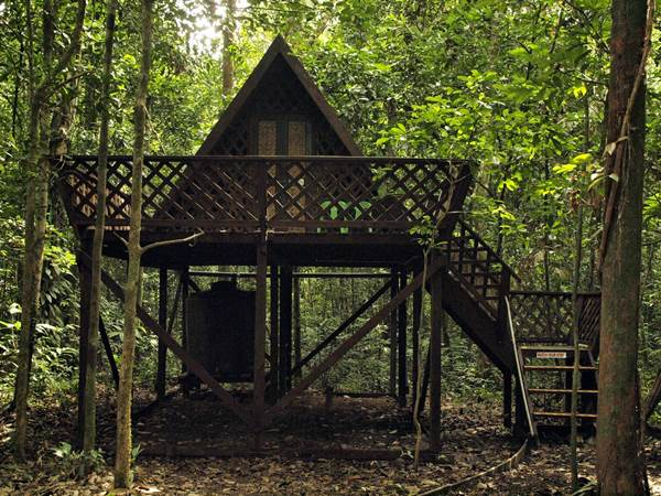 Tungog Rainforest Eco Camp, Kinabatangan