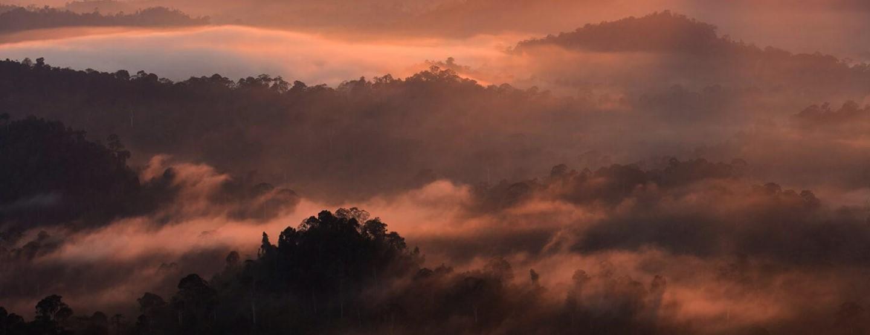 18 till 29: Utforska Borneos Berg och Regnskogar