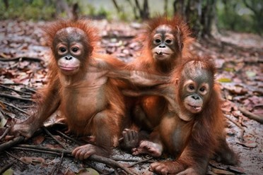familjeresa-djur-natur-borneo