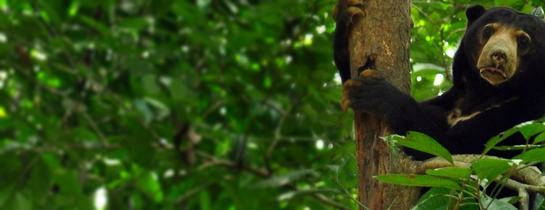 Rundresa på Borneo: Djur & Natur i Sabah [TAC++]