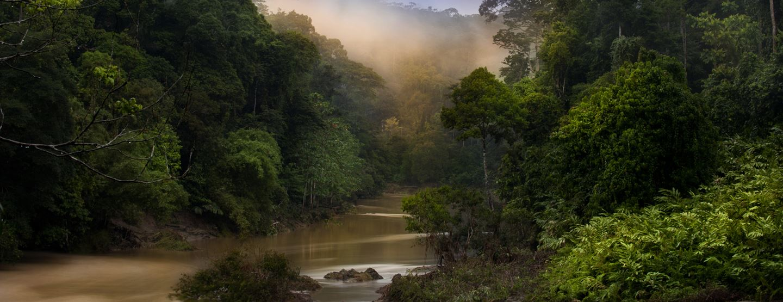 Familjeresa:  Äventyr på spännande Borneo [TAC+]