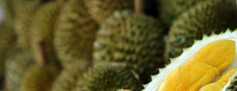 Matresa: Från Halongbukten till Angkor Wat [TAC+]