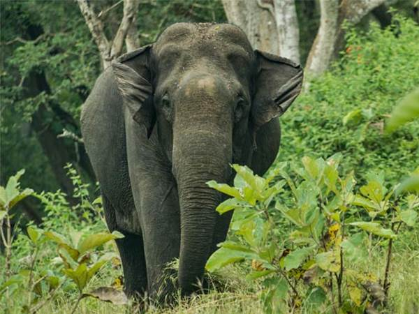 Mudumalai nationalpark