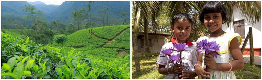 resa-till-srilanka-gruppresa