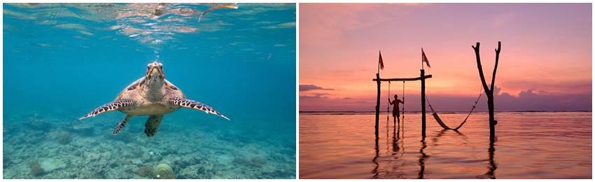 snorkling-gili-oarna-lombok-billig-resa