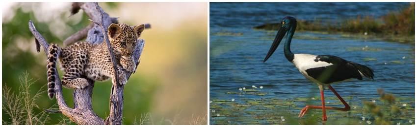sri-lanka-djur-och-natur-resa