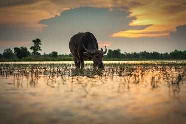 rundresor-asien-kambodja