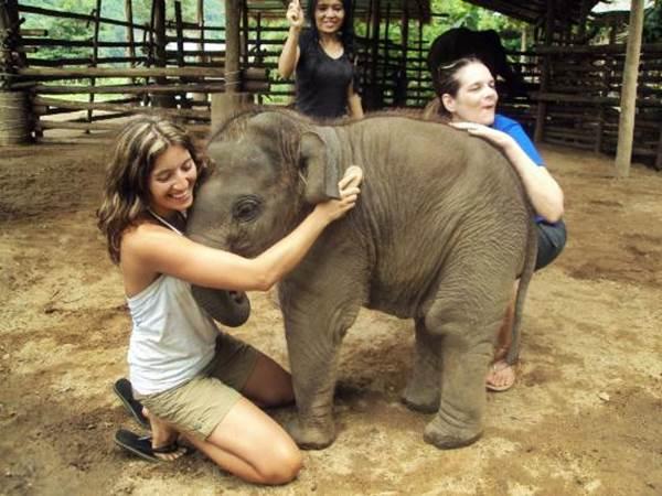 Elephant Nature Park, Mae Taeng