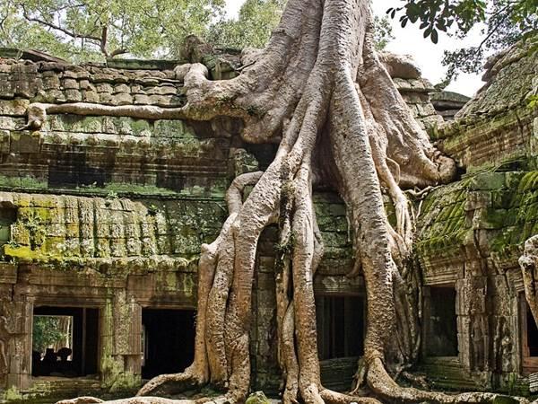 Ta Phrom, Angkor
