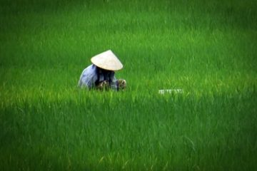 gruppresor-vietnam