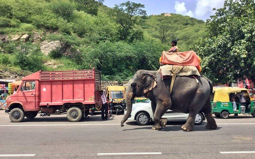 elefantridning-indien